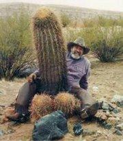 kaktusdiller